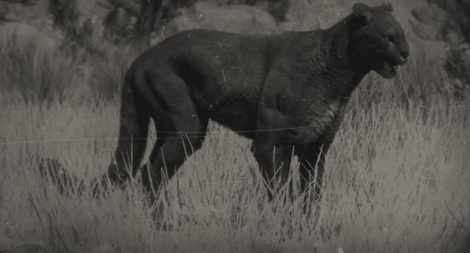 Legendary Cougar rd2